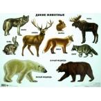 Плакат Проф-Пресс Дикие животные